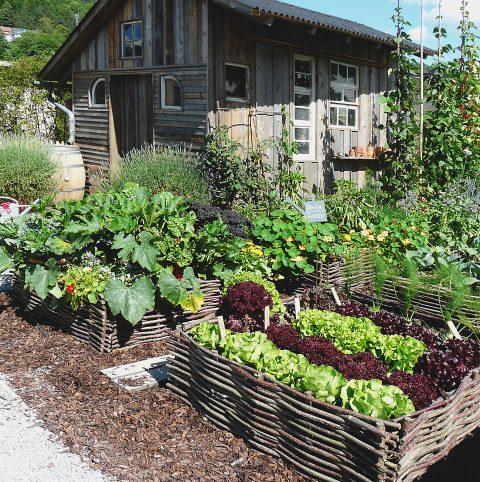 Garten und Gartengestaltung